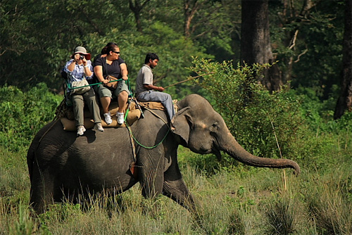 Elephant ride in Jaldapara Forest
